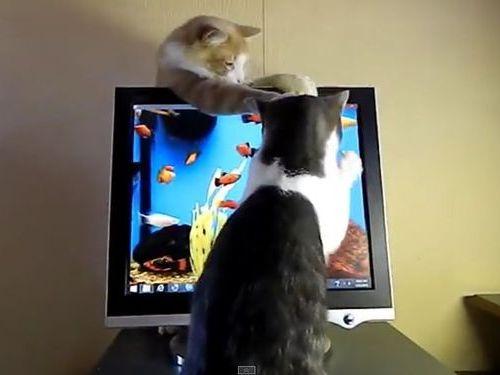 猫のモニタ画面・攻防戦01