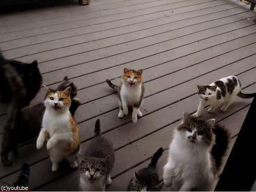猫の大合唱03