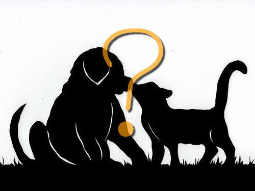 うちの犬の態度の違い00