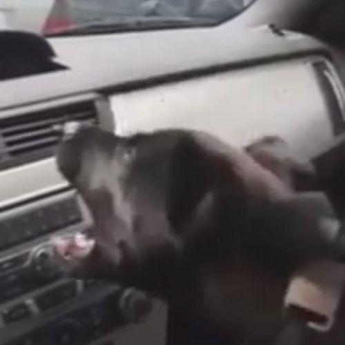 車のエアコンと犬05