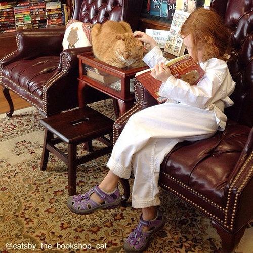 本屋の猫06