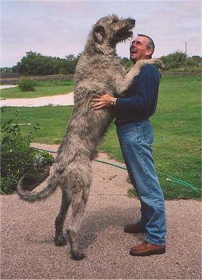 巨大な犬02