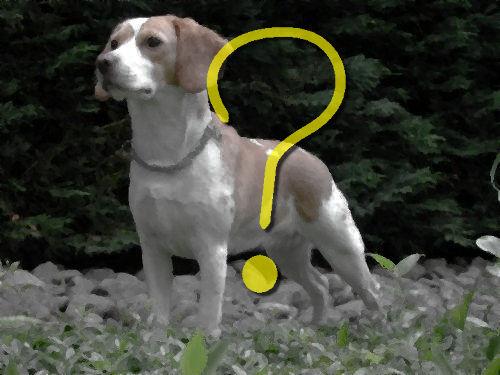 うちの猟犬が警戒態勢に入った00