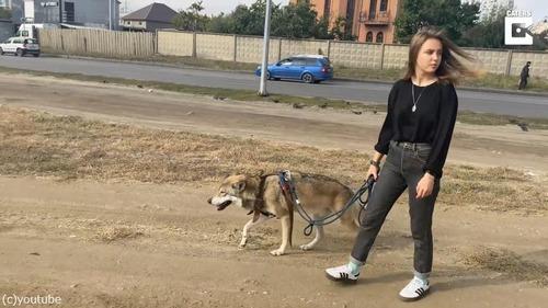 ペットオオカミとの楽しい日常風景04