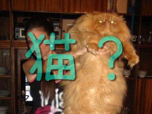 育ちすぎた猫たち00
