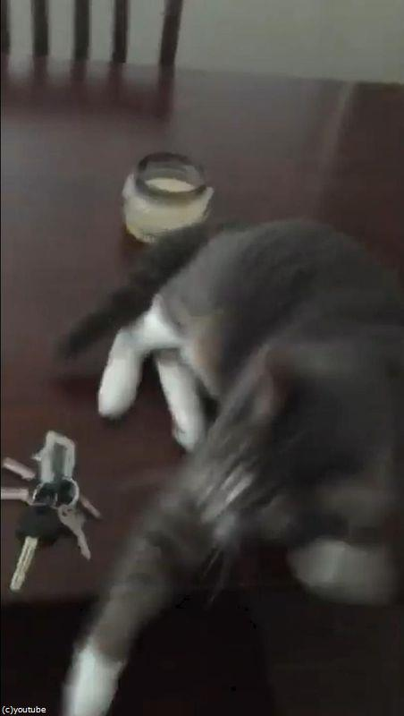 キーを守る猫05