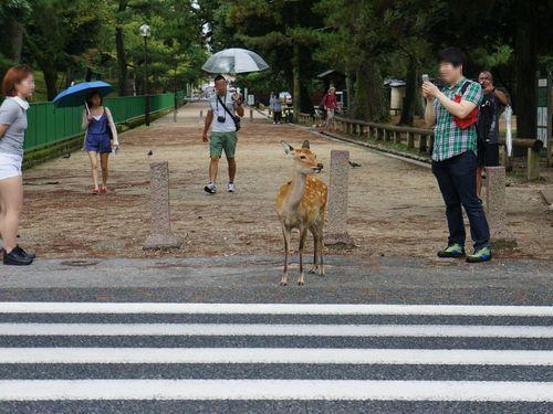 奈良の鹿と外国人03