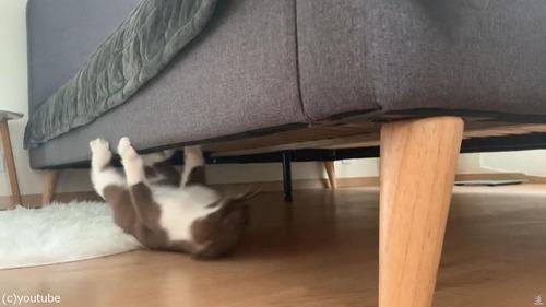 逆さに歩く猫03