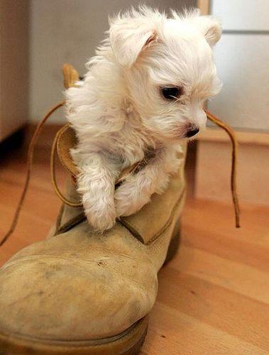 靴の中の犬19