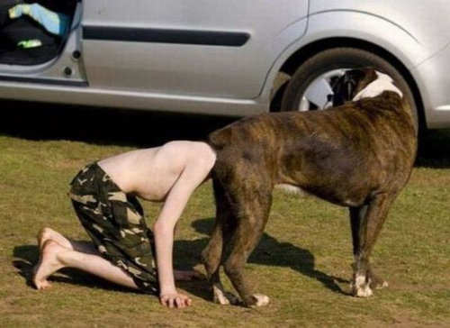 犬の決定的写真04