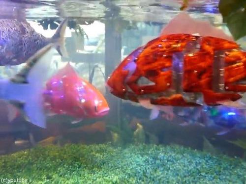 日本の魚ロボット02