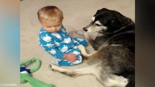 ウトウトする赤ちゃんとハスキー03