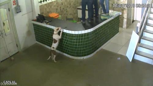 ブラジルの労働者たちが動物から逃げ惑う05