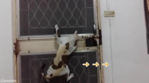ドアから脱出する猫04