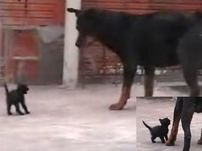 黒い子猫と黒犬の対決