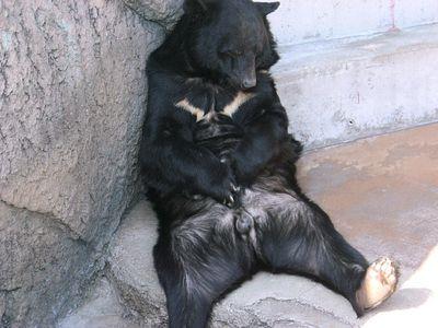 クマが釣られたり戦ったりあられもない格好したりする画像11