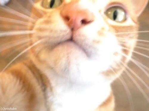 ホイップクリームを愛する猫00