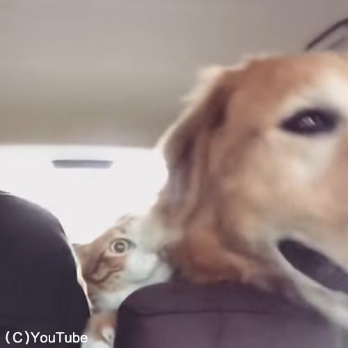 犬と猫のお出かけ06