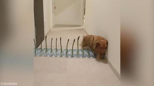 アスパラガスVS犬05
