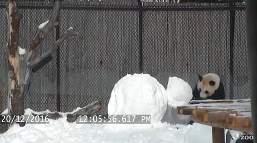 パンダVS雪だるま03