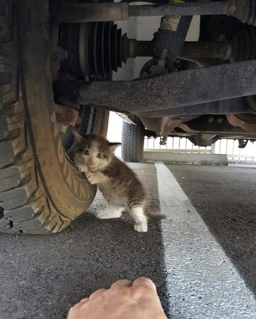 トラックの下でおびえてる子猫01