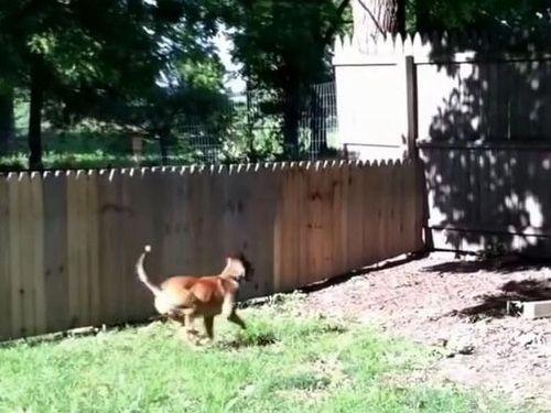 犬用のフェンスに誤算05