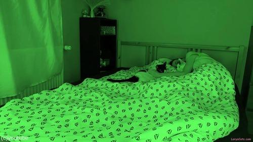 飼い主さんが眠っている間…猫たちはこんな感じ02