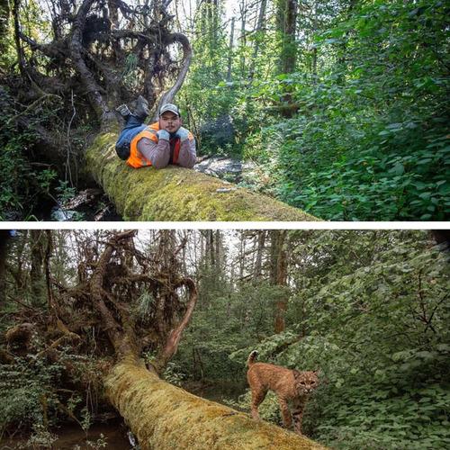 野生動物を自動撮影するカメラを設置した01
