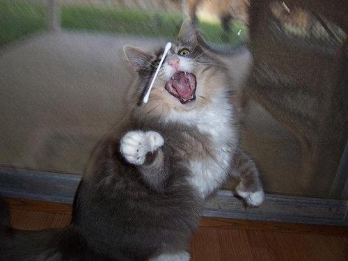 猫の綿棒キャッチ02