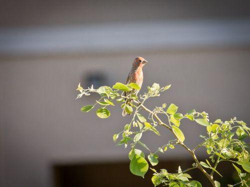 ウインドチャイムに鳥の巣07