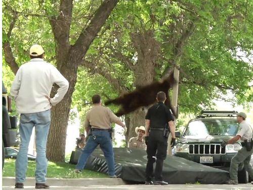 クマが落ちた03