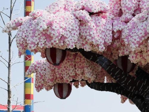 日本のレゴランドの桜の木がギネス記録02