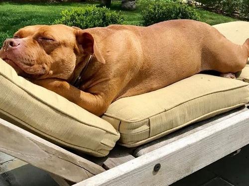 ふかふかのベッドを愛する犬00