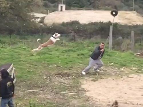 訓練された犬のジャンプ力03