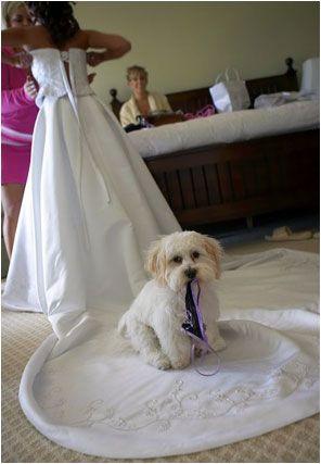 絶対に忘れられない結婚式の写真17