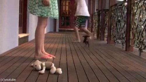 レディを守る小さな子犬09