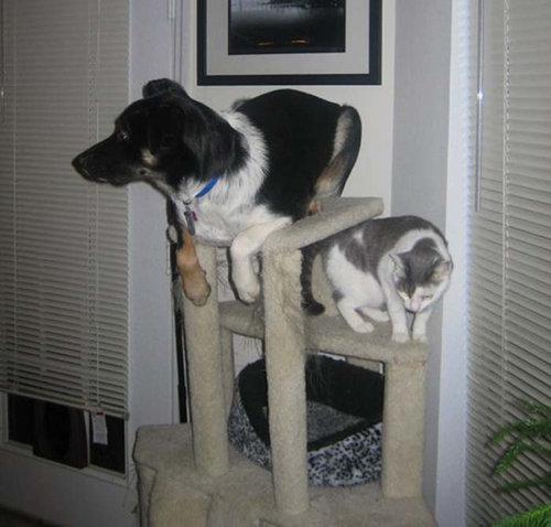 猫みたいな犬09