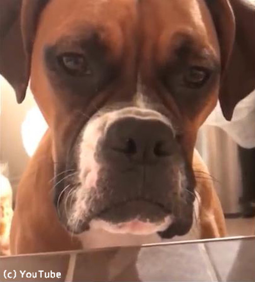 入浴中の飼い主さんをじっと見つめるワンコたち03