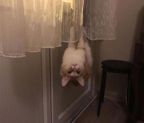 重力を無視する猫04