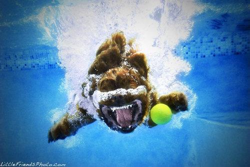 水中の犬12