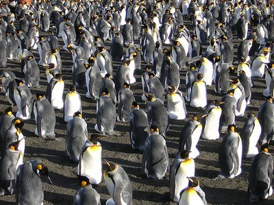 ペンギン13