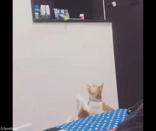 子猫の欲しがるおもちゃをママ猫が取っ手あげる03