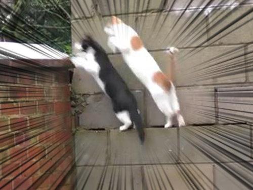 シンクロ猫00