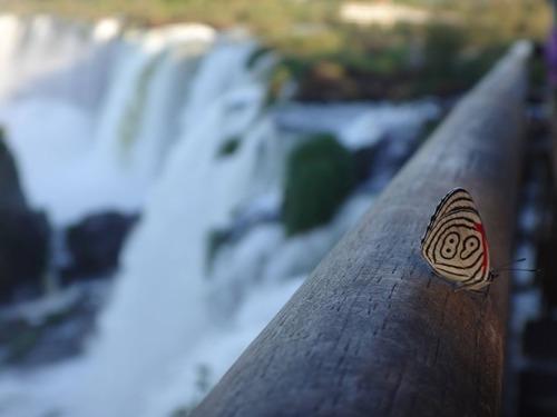 89番の蝶々01