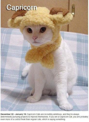 猫で12星座占い10
