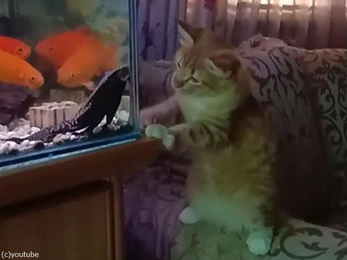 猫vs水槽00