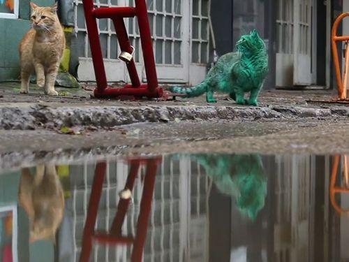 エメラルドグリーン色の猫05