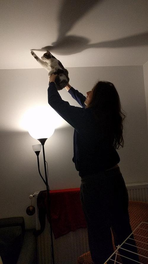 猫を手伝ってあげた01