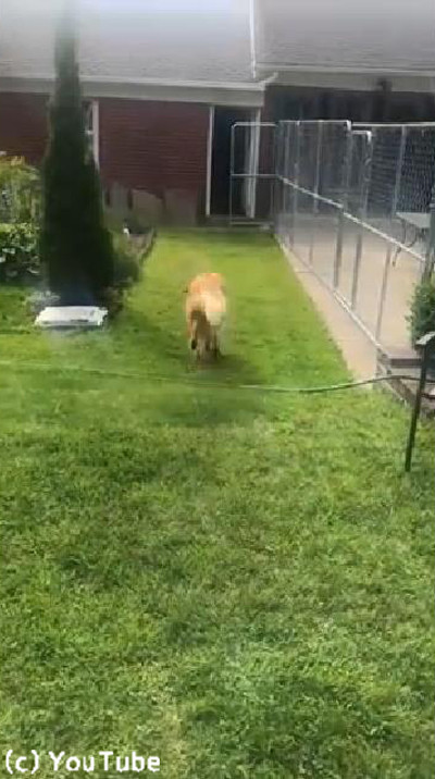 介助犬のトレーニングに励むワンコ02