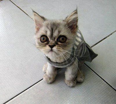 こんな猫はいやだ05
